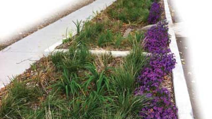 Kc Purple Green Plants 1304ww