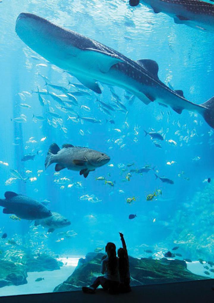 Ozone 1 Ocean Voyager Whale Shark