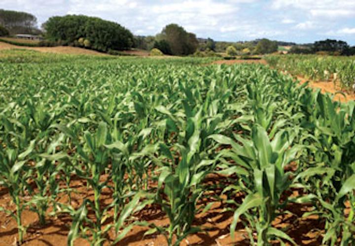 Us Water Cor Non Sorbital Photo Corn Field1