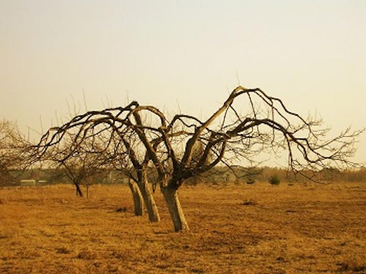 Content Dam Ww Online Articles 2016 05 Sa Drought