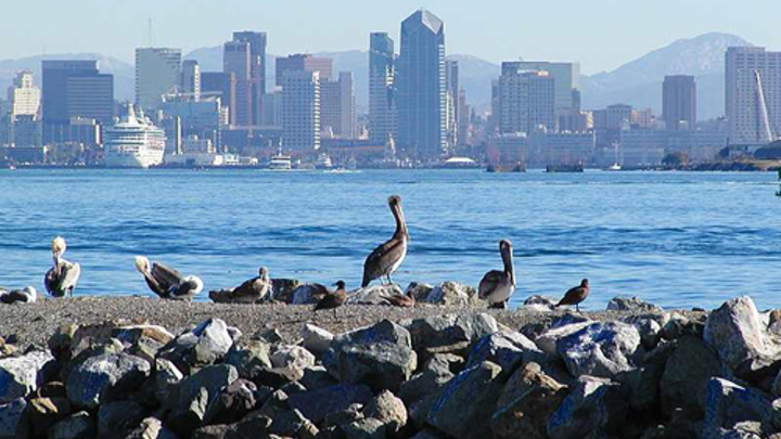 Content Dam Ww Online Articles 2016 06 San Diego Pelicans Birds City Skyline Water