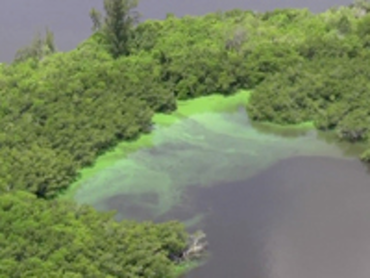 Content Dam Ww Online Articles 2016 07 Ww Newscast 20160705 Florida Algae Bloom2 Credit Associated Press 200x150