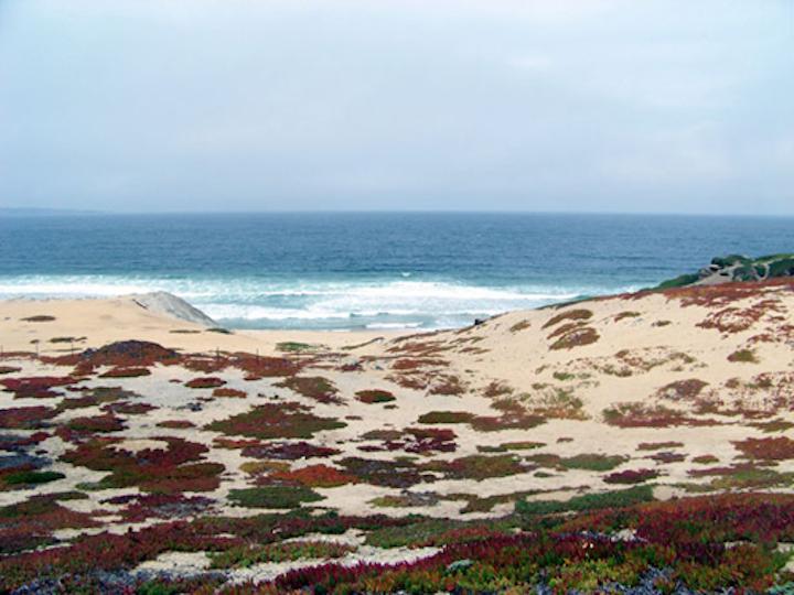 Content Dam Ww Online Articles 2018 09 Ww Cpuc Monterey Desal Monterey Beach