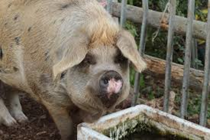 Content Dam Ww Online Articles 2018 10 Iww Pork Processer Nitrogen