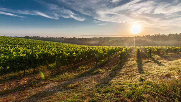 Content Dam Ww Online Articles 2017 01 Tuscany Grape Field Nature 51947  1