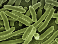 Content Dam Ww Online Articles 2019 01 Ww Newscast 20190128 Koli Bacteria Coliform E Coli 123081 1920 Pixabay Cc0 200x150