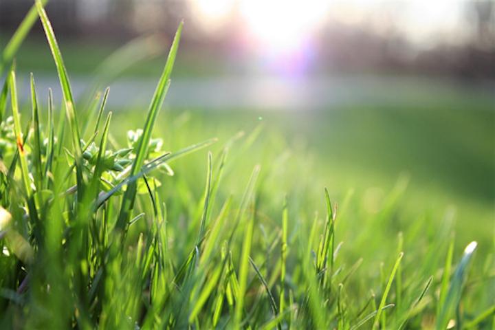 Content Dam Ww Online Articles 2019 01 Ww Quebec Blade Of Grass Depth Of Field Environment 580900