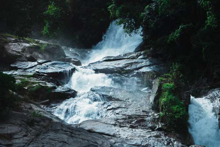 Content Dam Ww Online Articles 2019 02 Ww Cascade Environment Forest 934868