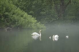 Content Dam Ww Online Articles 2019 03 Swan Lake Pixabay