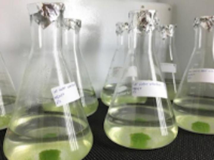 Content Dam Ww Online Articles 2019 04 Ww Newscast 20190415 Story1b Green Algae Samples Credit Xuelian Bai Dri 200x150