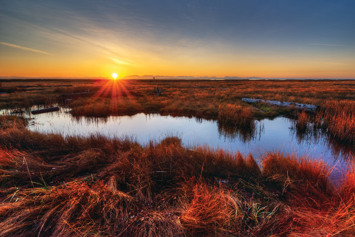 Defining a Wetland | WaterWorld