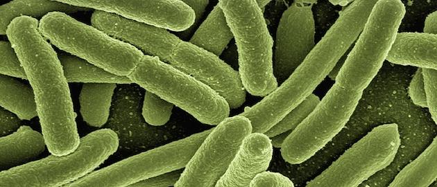 Koli Bacteria 123081 640
